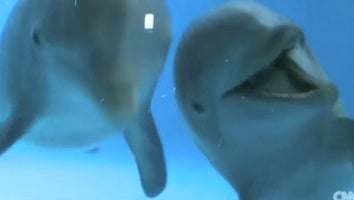 Adorable Dolphins Play With Their Adorable Reflections