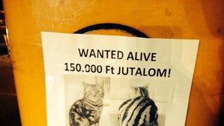 A Rózsadombon keresik az ország legdrágább macskáját