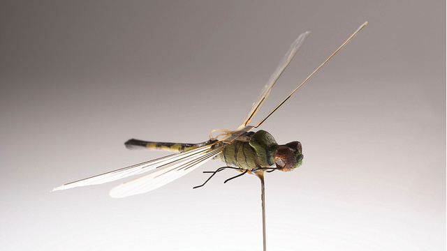 Meet the CIA's robotic animal agents: Charlie the spy fish and the robo-dragonfly
