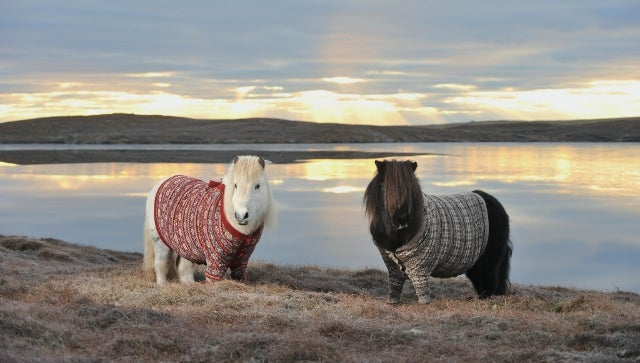 Scotland's Tourism Board Knows Exactly How to Get People to Visit Scotland: Shetland Ponies in Cardigan Sweaters