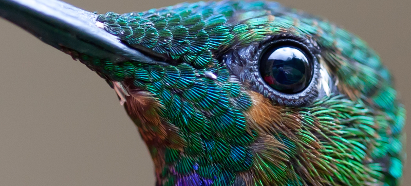 The Detail In This Hummingbird Photograph Is Unreal