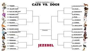 Jezebel's March Madness 2011: Cats Vs. Dogs