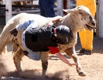 When Mutton Bustin' Goes Horribly Wrong