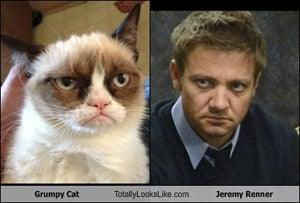Comment of the Day: Jeremy Renner Is Grumpy Cat