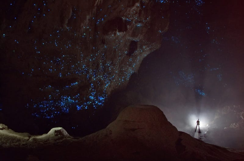 This beautiful starry sky is a cave full of glowworms in New Zealand