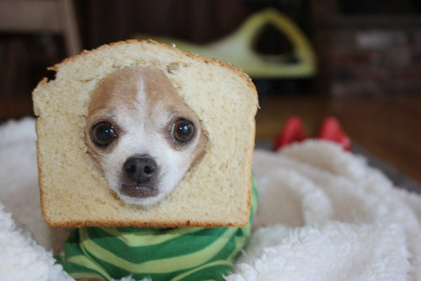 Here Are Your Best Pictures of Breaded Cats