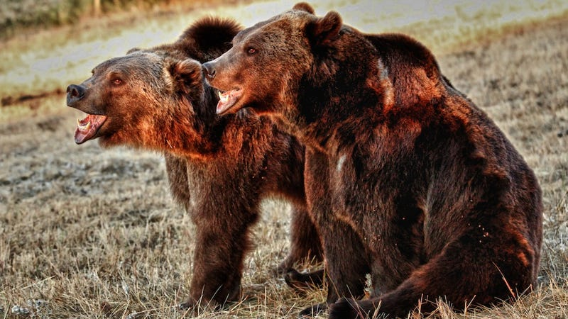 Bears, Ranked