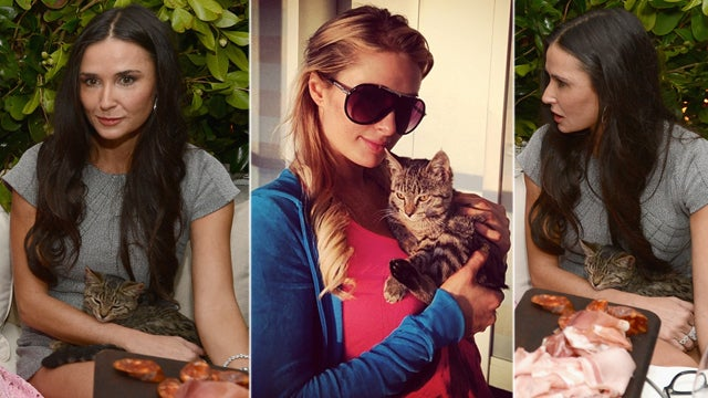 The Kitten All of Hollywood Is Trying to Date: Who Is Demi Moore's Mystery Cat? [UPDATE: Nicky Hilton Kidnapped It]