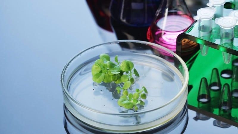 Science Gel Could Help Dieters Caulk Their Own Bowels