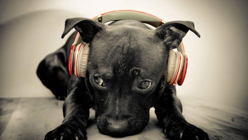 POP QUIZ: Music Edition