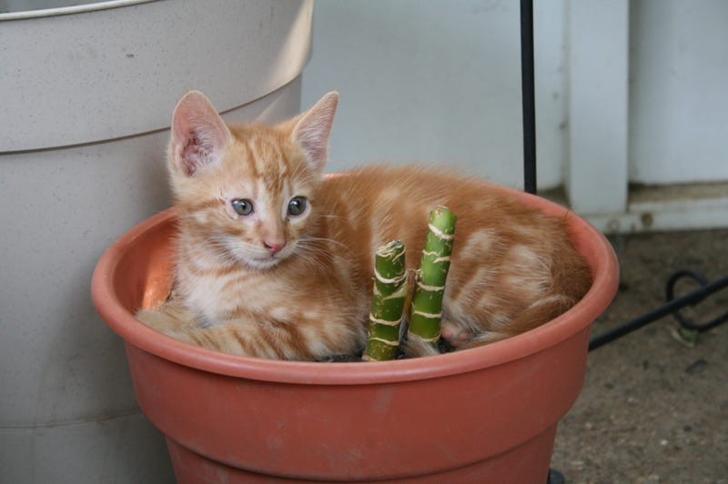 Buy Houseplants That Won't Kill Your Pets
