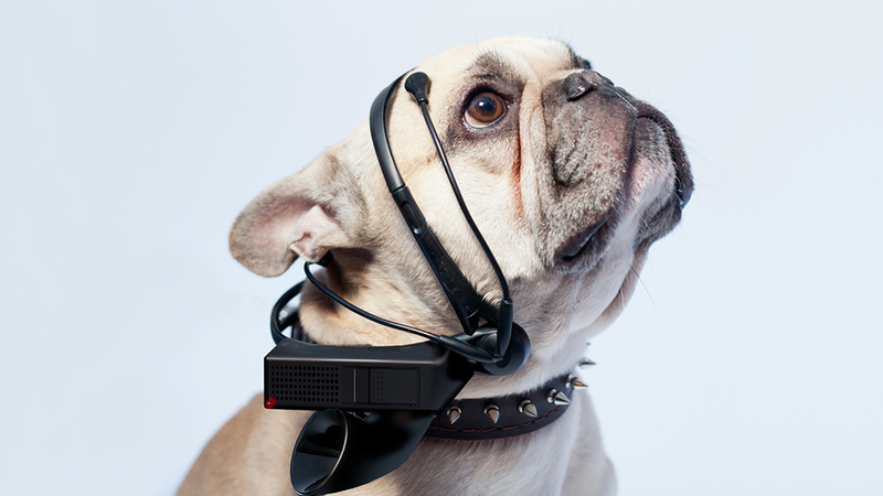 Your Dog Could Talk Back With This Mind-Reading Headset