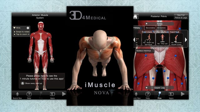 iMuscle Teaches You to Stretch and Exercise by Literally Showing You the Muscles in Action