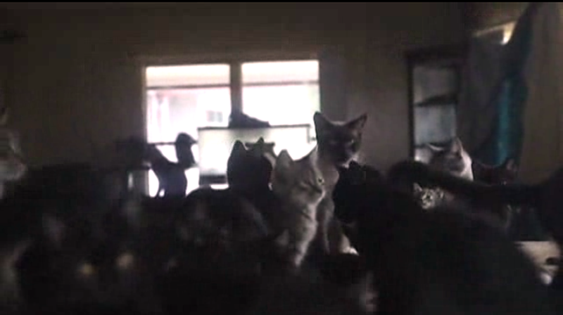 This Is What 65 Cats Taking Over a Mobile Home Looks Like