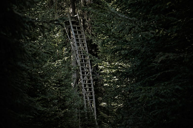 Photos of Tree Stands Make This Forest Seem Incredibly Spooky