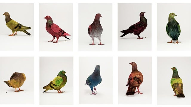 Pigeon-painting machine turns the rats of the sky into colorful works of art