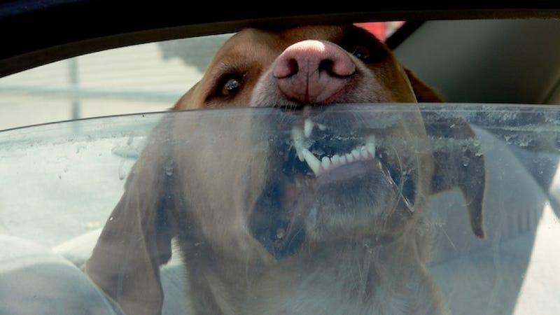 How To Avoid Heatstroke In A Parked Car
