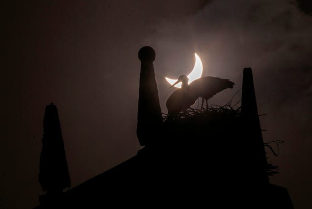 Today's Solar Eclipse in 22 Stellar Photos