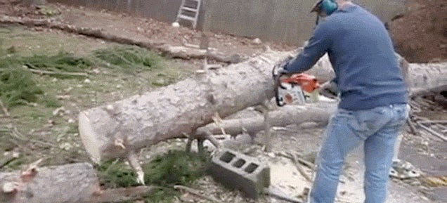 Magic tree stands back upright after being chopped down to the ground