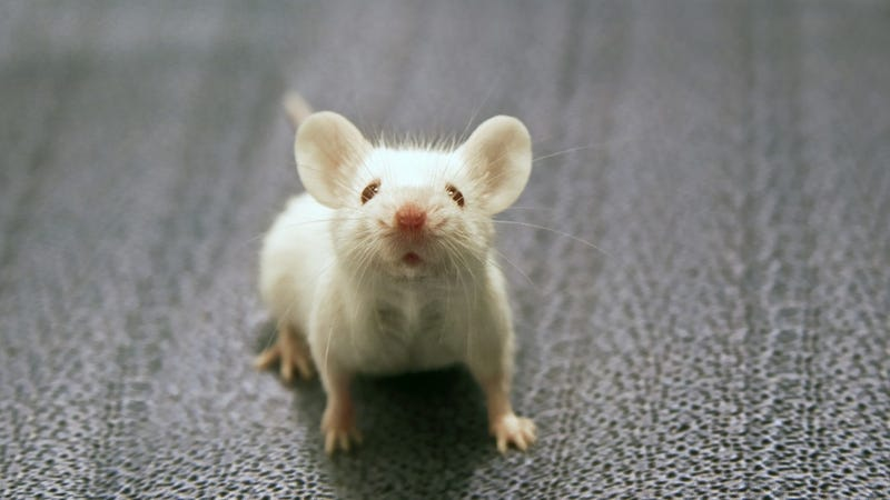 Guys, Scientists Incepted a Mouse. We're Next.