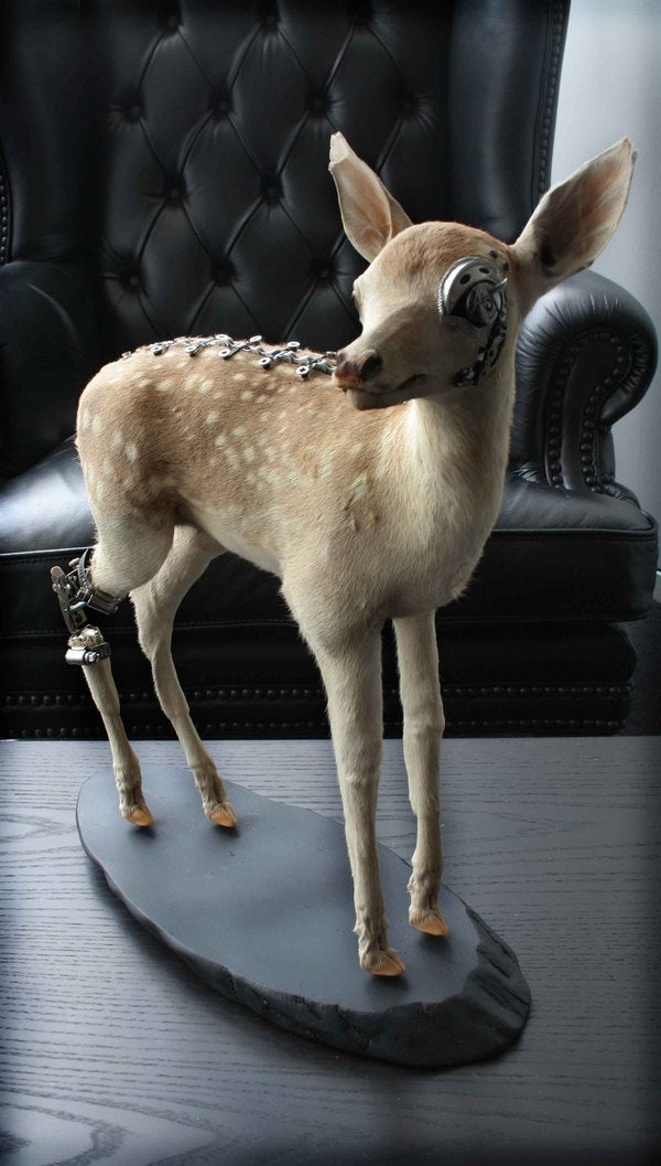 Steampunk Taxidermy Takes Steampunk to Awkward Places