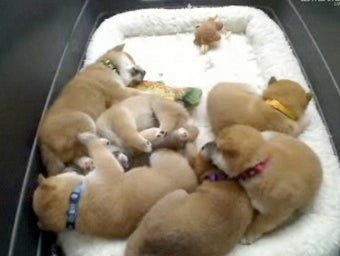 But What Does the Puppycam Mean?