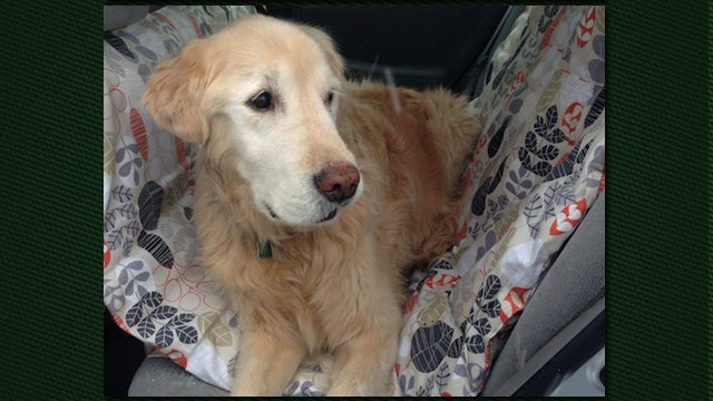 Make Your Own Dog Car Hammock For Long Road Trips