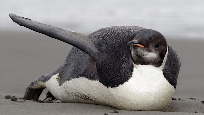 Adorable Space Census of Penguins Shows that there Are a Lot of Penguins