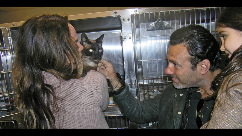 So Wonderful: Family Reunited with Cat Eight Years After He Ran Away