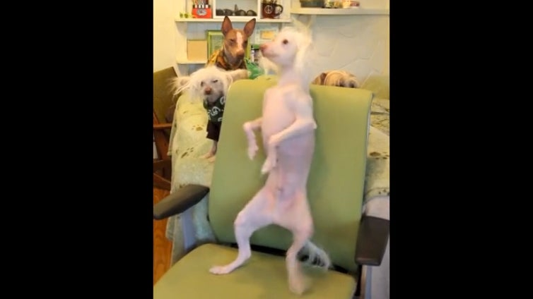 Don't Be Jealous, but This Dog Is a Way Better Dancer Than You