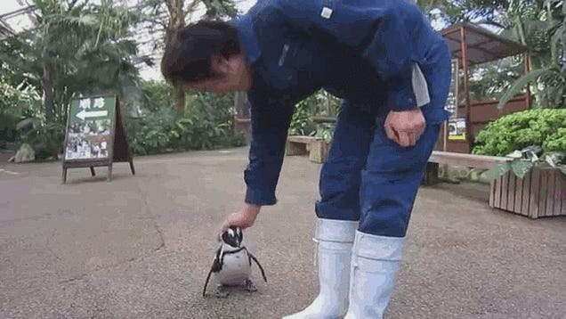 The Penguin Who Fell in Love with a Grown Man
