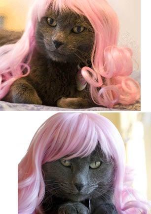 Glamorous Cat Wigs
