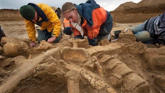 A rare, near-complete mammoth skeleton has been unearthed near Paris
