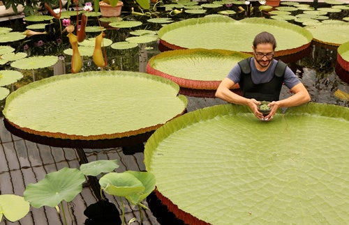 Man Saves World's Tiniest Water Lily from Extinction