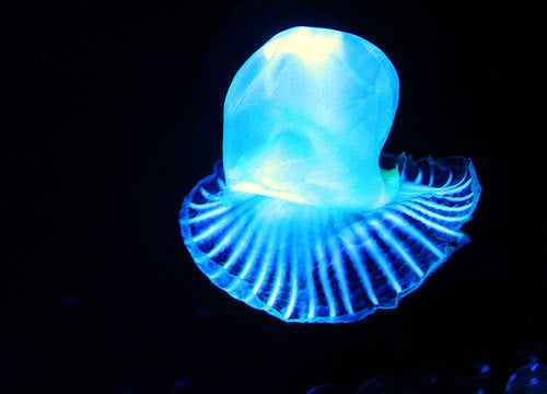 Bioluminescence Could Keep Tumors From Spreading
