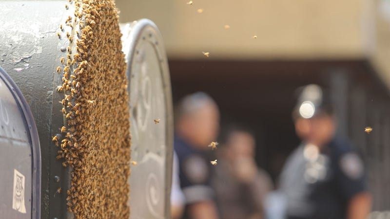 This Manhattan Mailbox Has Been Completely Taken Over by Bees