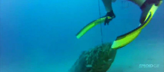 Giant goliath fish punks a fisherman and then steals his fish and gun