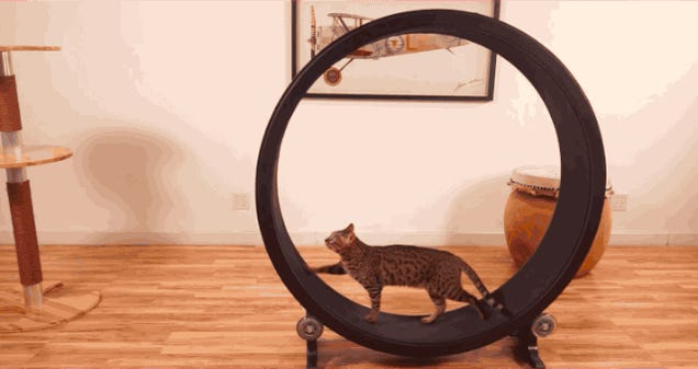 Some Genius Designed A Hamster Wheel For Cats