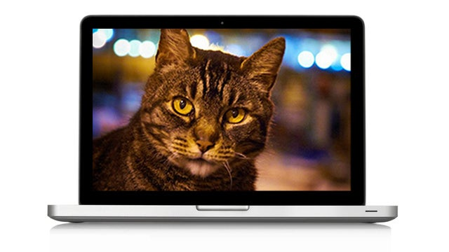 Google's Artificial Brain Loves to Watch Cat Videos