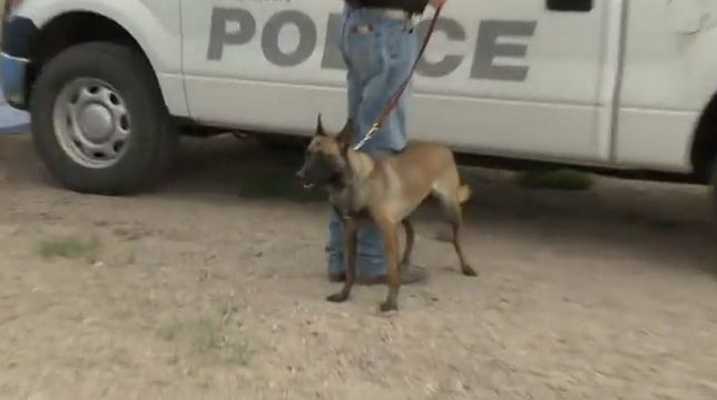 New Mexico Town Down to Just One Police Officer: A Dog Named Nikka