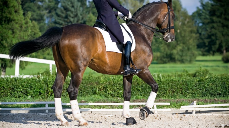 Ann Romney's Fancy Dancing Horse Is Headed to the Olympics
