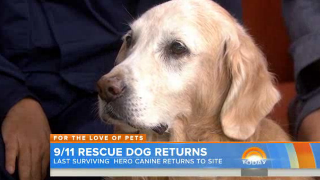 9/11's Last Surviving Search Dog Goes on Today, Tears Ensue