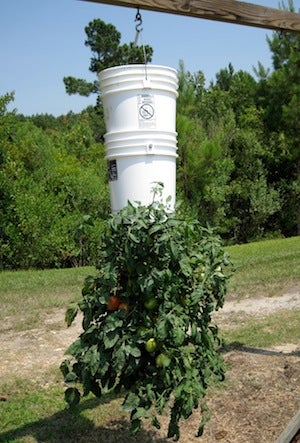 Build an Upside Down Tomato Planter for Effortless Vegetable Growing