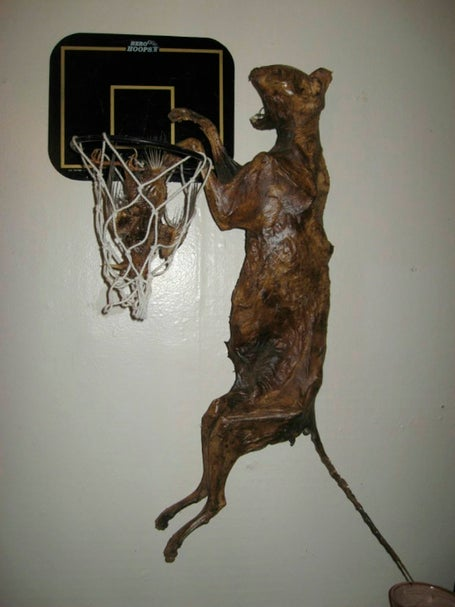 """Mummified Cat Slam Dunking Mummified Bird"" Is Exactly What It Sounds Like"