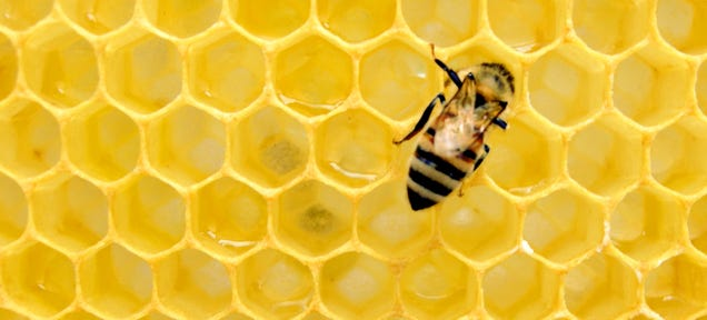 How a Bee Sting Saved My Life