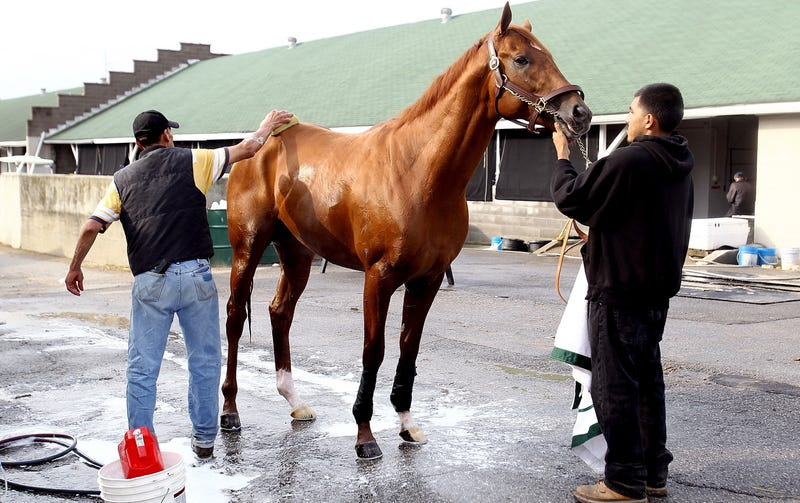 I'll Have Another's Trainer Talks Strategy With His Horse, But Quietly, So Other Horses Don't Overhear