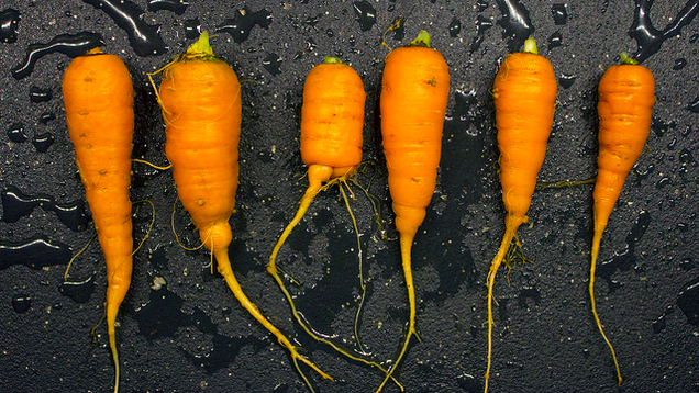 The Seven Easiest Vegetables to Grow for Beginner Gardeners