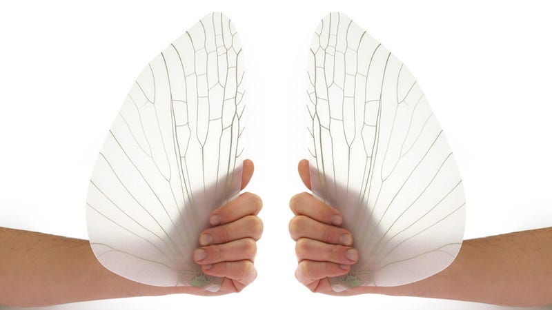 You Should've Seen the Fly Swatter That Made These Insect Wing Fans Possible
