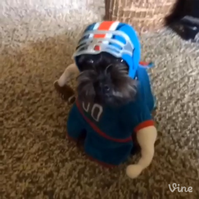 I Can't Stop Watching This Dog Run Around In A Football Costume