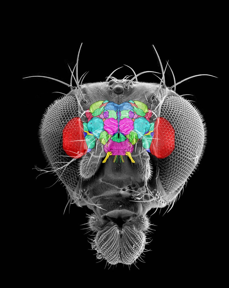 Explore the Inside of a Fruit Fly Brain in Stunning 3D